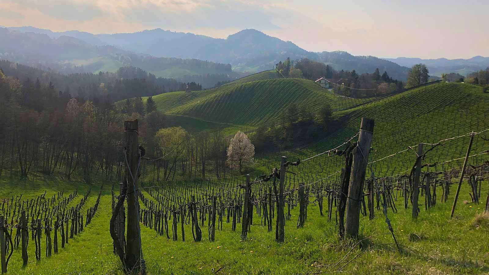 Exploring Styria: Austria's Hidden Gem