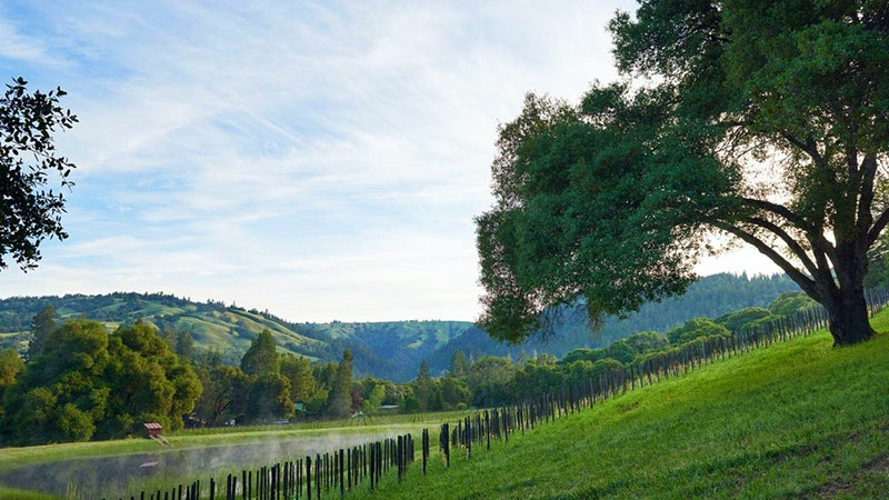 Exclusive: Jackson Family Wines Buys Balo Vineyards in Anderson Valley