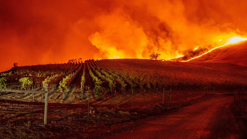 Wildfire Scorches More than 16,000 Acres in Sonoma Wine Country