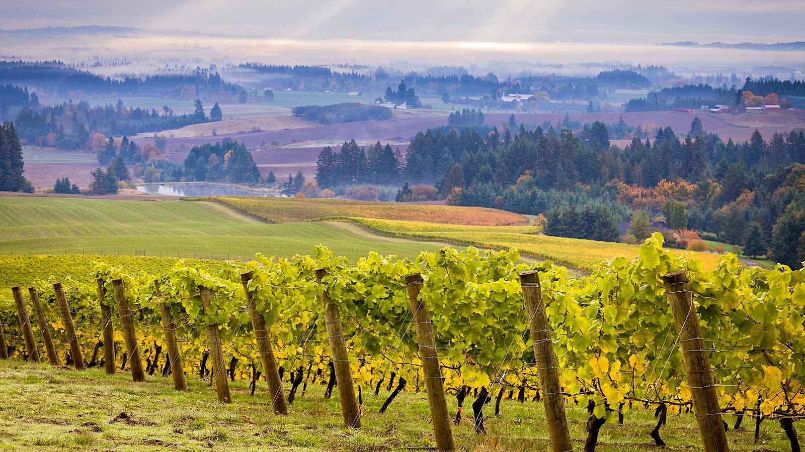 8 Oregon Chardonnays at 90+ Points
