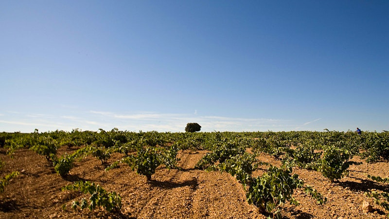 10 Spanish Reds to Beat the Cold