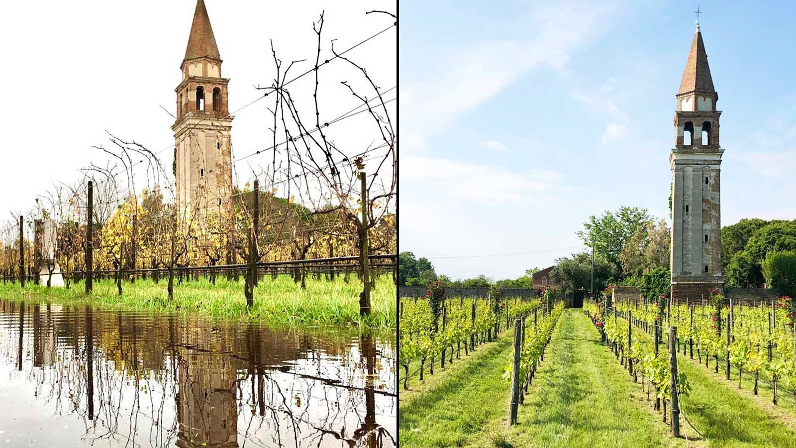 Record Flood Swamps Venice's Unique Vineyard