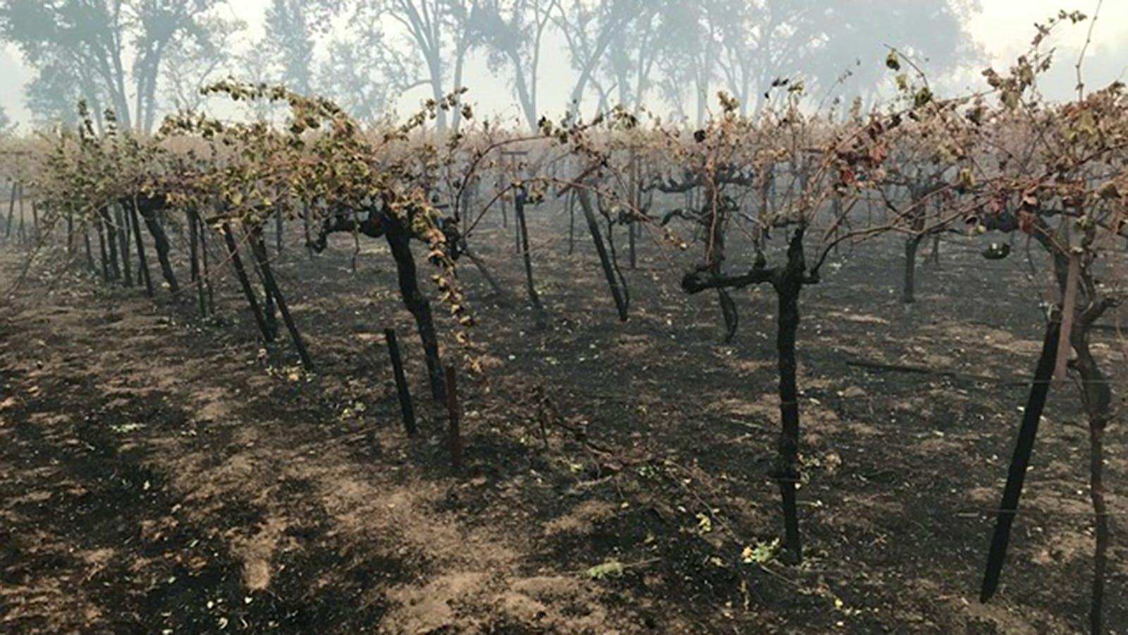 California Wineries Sue Insurers over Smoke-Tainted Wines