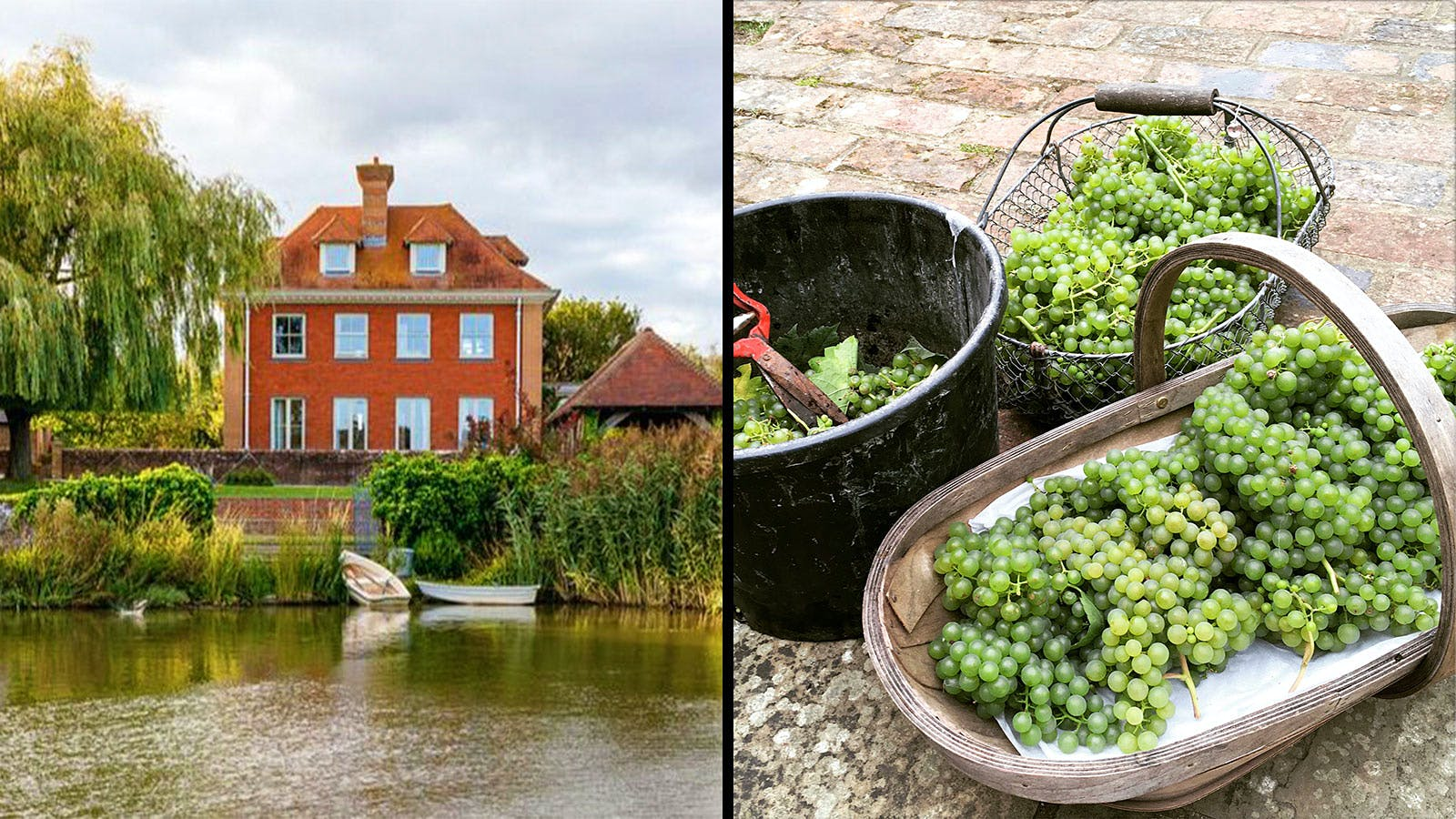 Is this the World's Smallest Vineyard?