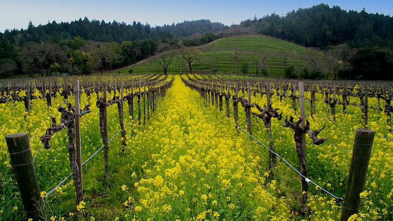 Off Napa's Beaten Path at Detert Family Vineyard