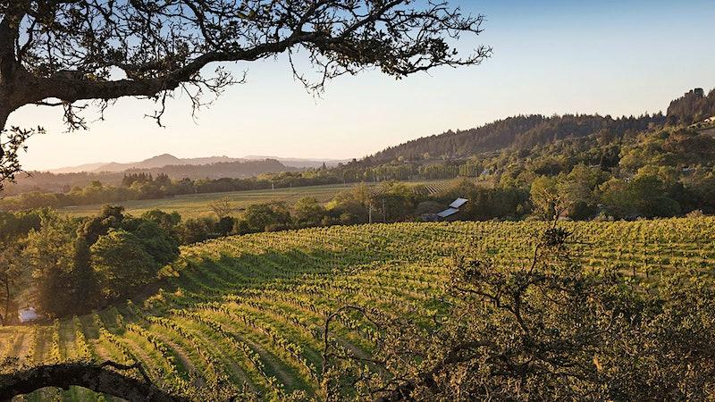 8 Outstanding California Sauvignon Blancs
