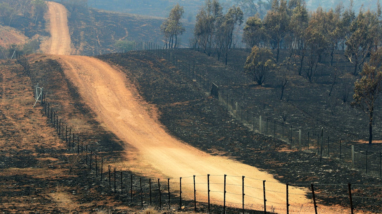 After the Fires, Australian Wineries Assess the Damage