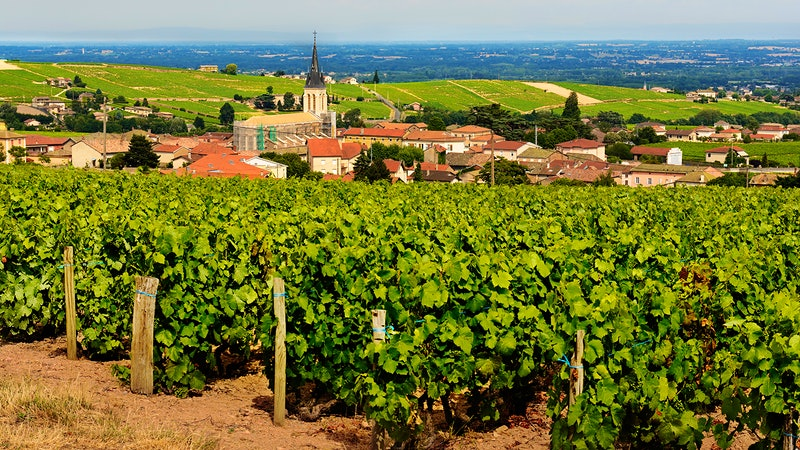 8 Charming Gamays from Beaujolais