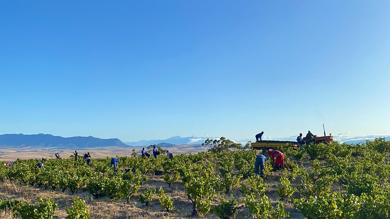 South Africa's Vintners Can't Sell Wine at Home or Abroad