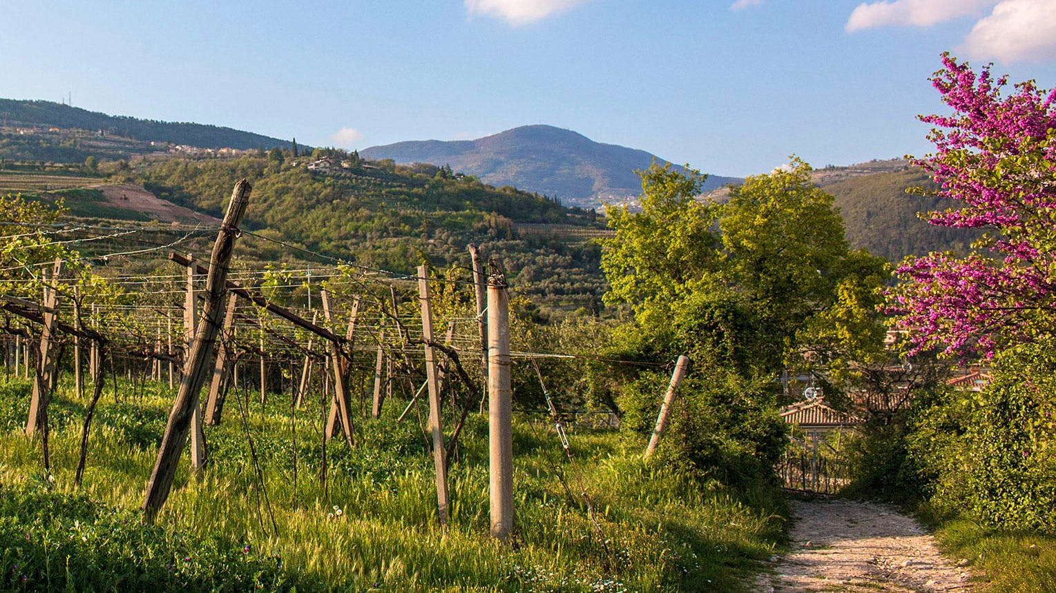 The Poet of Valpolicella