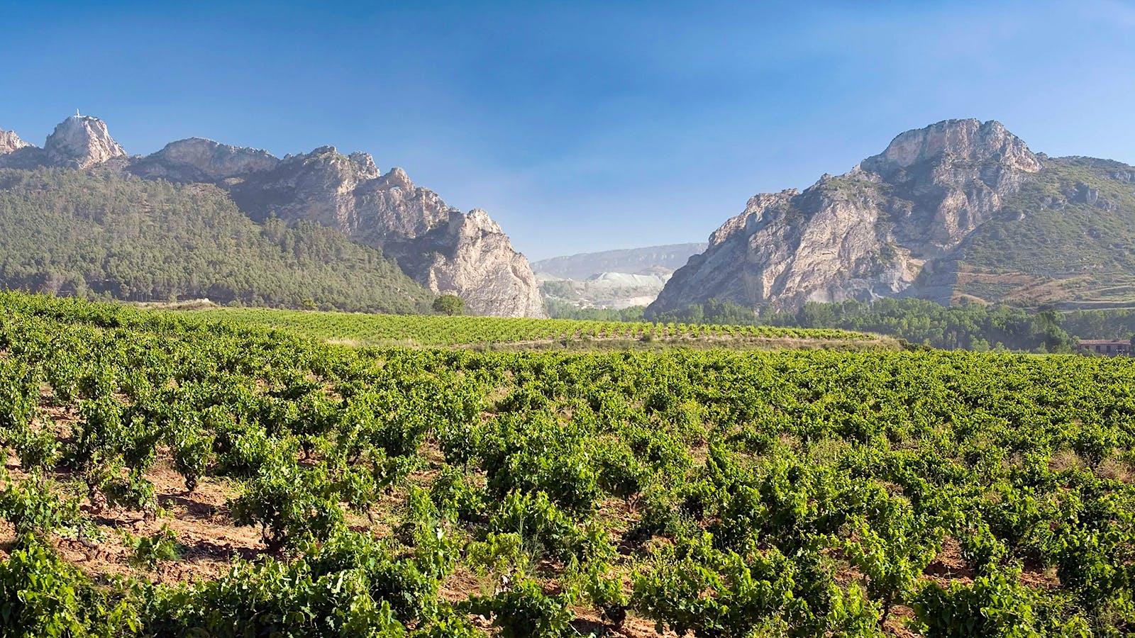 8 Vibrant Values from Rioja