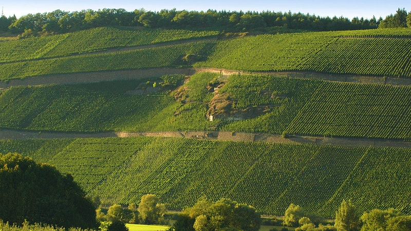 8 Vibrant German Rieslings