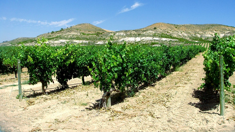 8 Red Values from Ribera del Duero