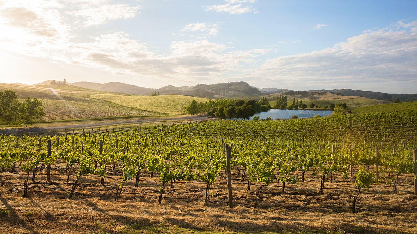 9 Outstanding California Chardonnays