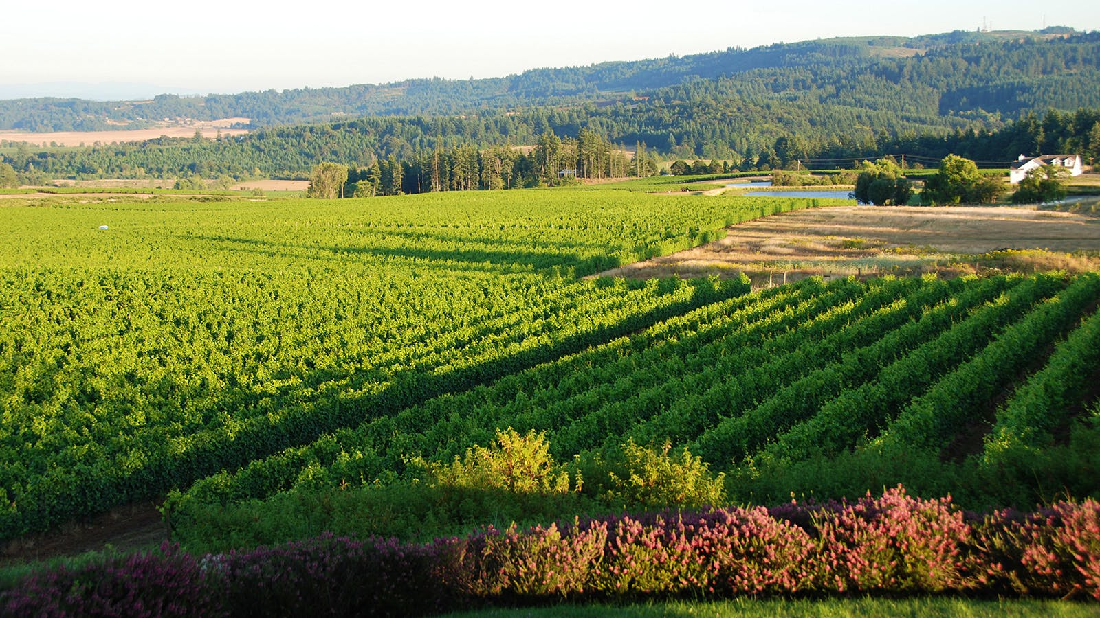 8 Alluring Oregon Pinot Noirs Rated 90+ Points