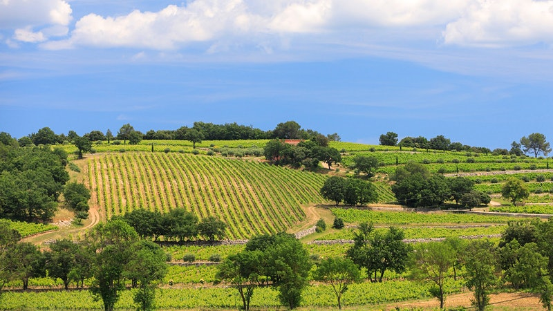 Bordeaux Vintners Look to Provence