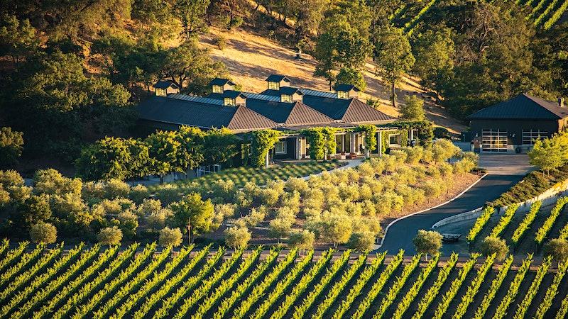 8 Refreshing Napa and Sonoma Sauvignon Blancs