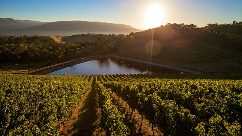 Exclusive: Jackson Family Wines Buys Australia's Giant Steps Winery