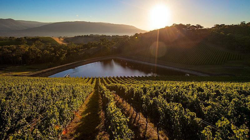 Exclusive: Jackson Family Wines Buys Australia's Giant Steps Winery