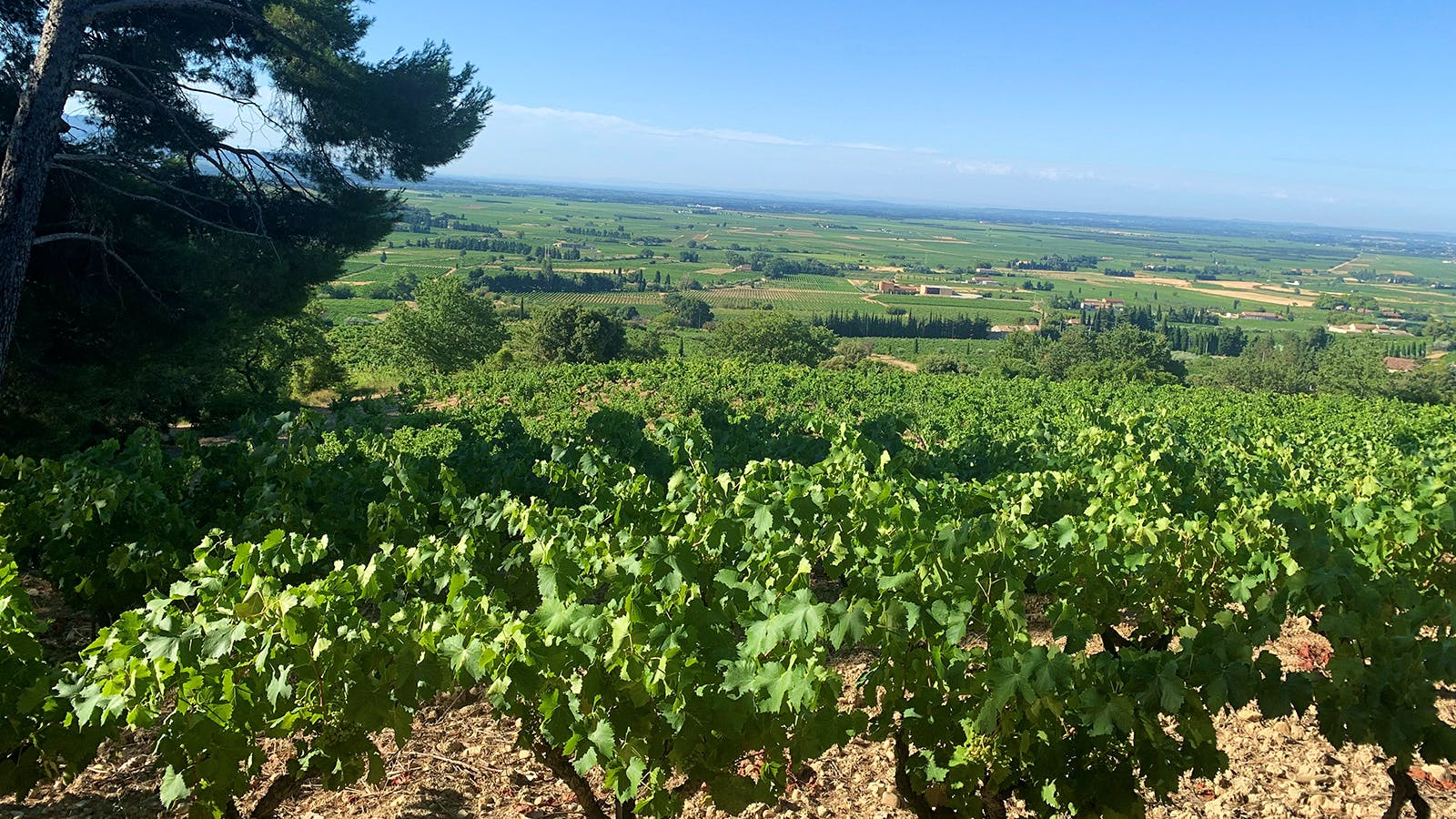 Leading Vintners in Châteauneuf-du-Pape Make Two Big Acquisitions