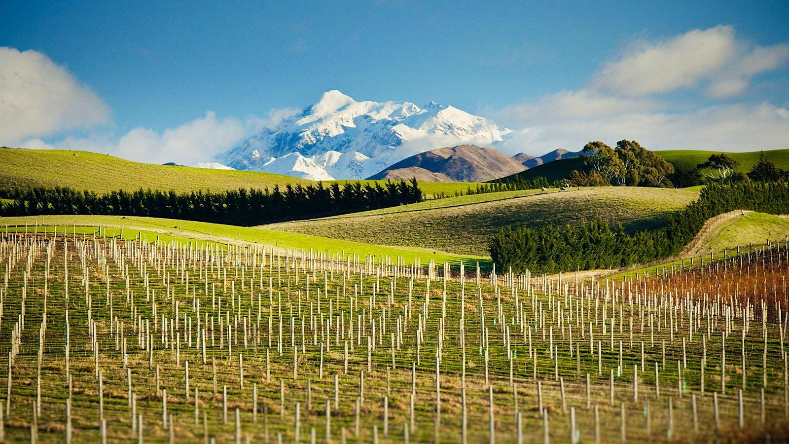 8 Vibrant New Zealand Sauvignon Blancs