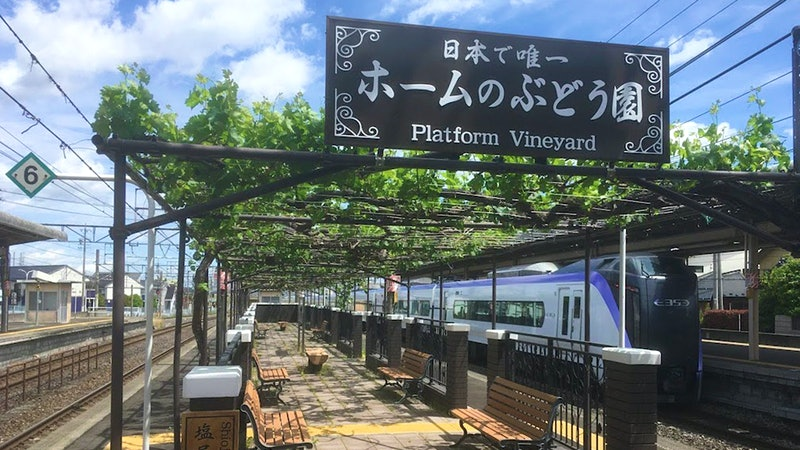 One-of-a-Kind Vineyard in Japan Offers Alternative Interpretation of Vine-Training