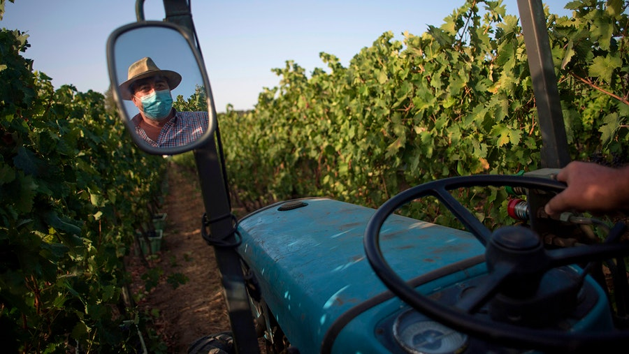 Federico Schatz, owner of Schatz Wineries, drives through his vineyard in Ronda in Spain's Andalusia region.