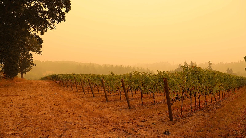 How Will Weeks of Wildfire Smoke on the West Coast Impact the 2020 Vintage?