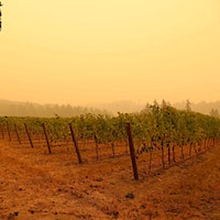 Smoke from the Riverside fire drifts over an Oregon vineyard. But it's unclear if it will affect the grapes.How Will Weeks of Wildfire Smoke on the West Coast Impact the 2020 Vintage?