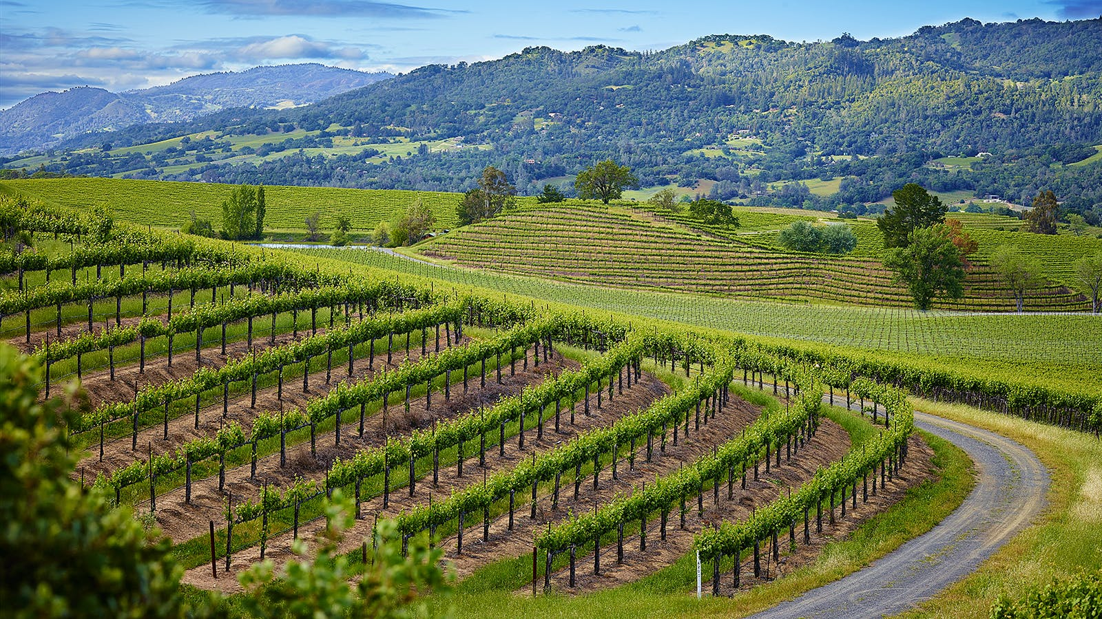 12 Exciting California Cabernets for $40 or Less