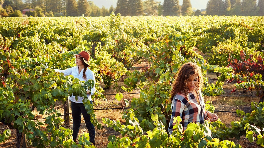 Robin McBride, left, and Andréa McBride John learned from winemakers and grapegrowers as they started their company as a boutique import firm.