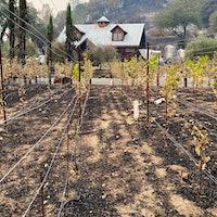该酒厂仍金宝博手机停留在菲弗帕维特,但地产葡萄园是亏损的,就像葡萄藤maturing.Napa的酿酒师发现烧焦的藤蔓和关闭呼叫
