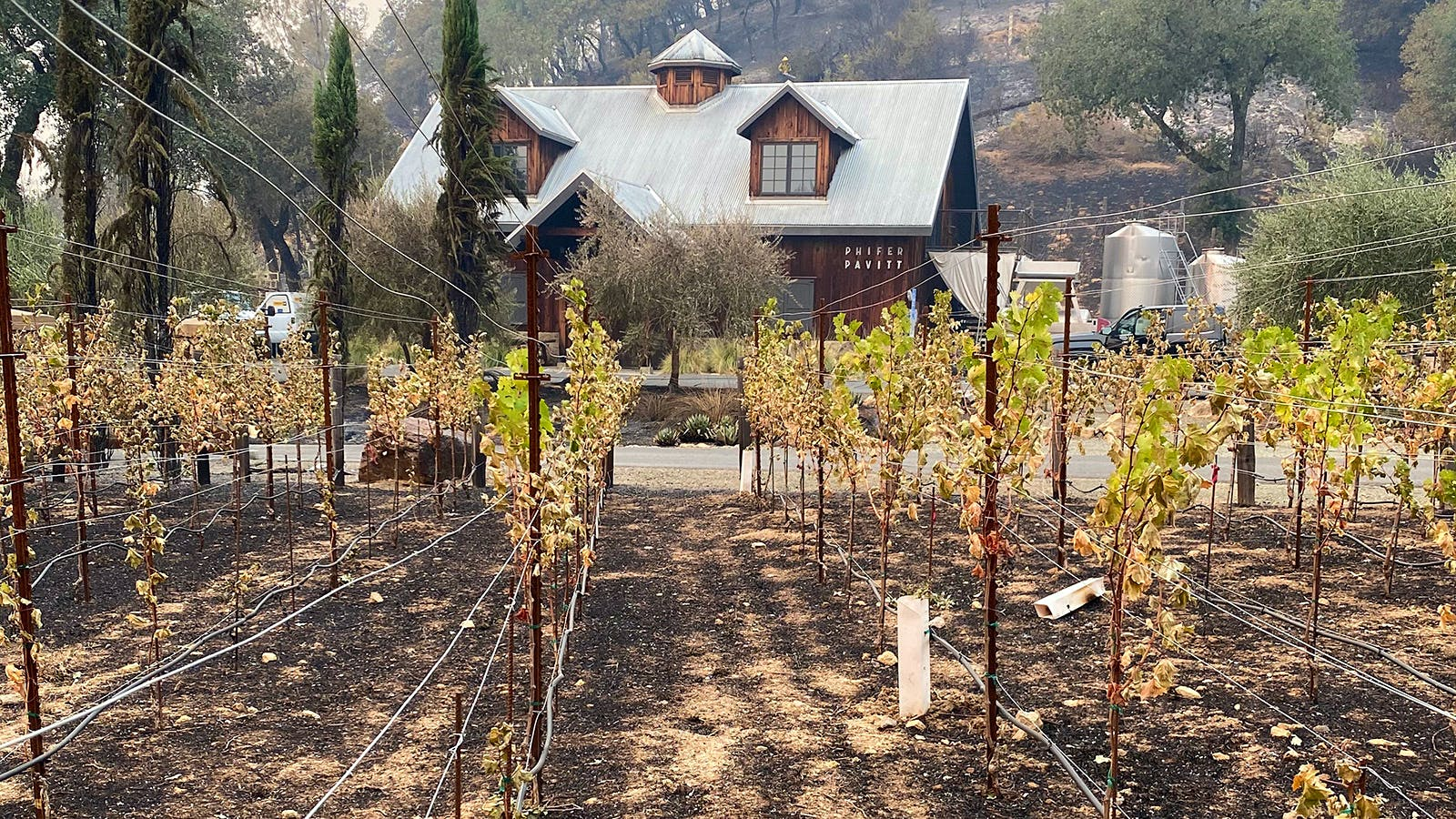Napa's Winemakers Discover Scorched Vines and Close Calls