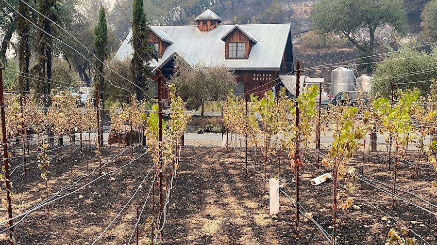 该酒厂仍金宝博手机停留在菲弗帕维特,但地产葡萄园是亏损的,就像藤蔓成熟。