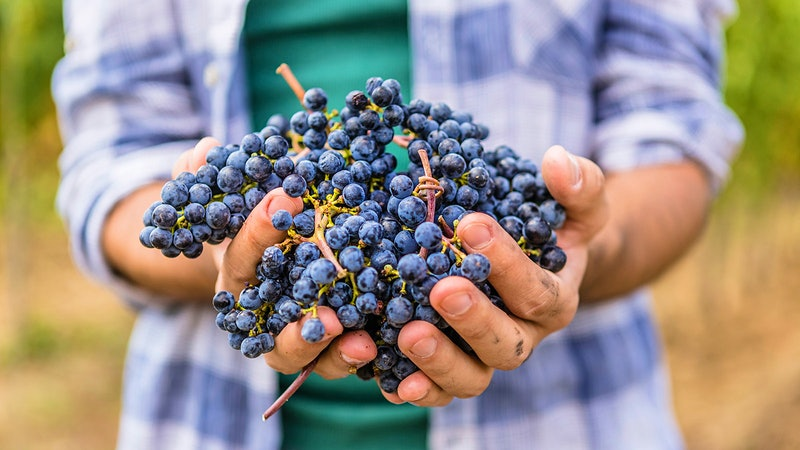 Flavanol-Rich Diet, Including Wine, Linked to Lower Blood Pressure