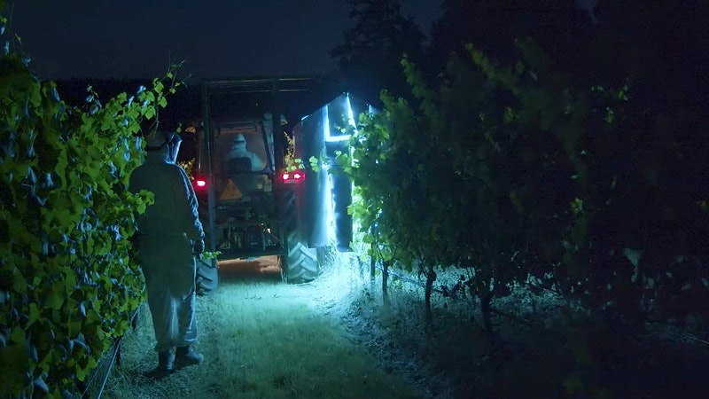 Could a Tool to Combat Coronavirus Also Protect Grapevines from an Annual Threat?