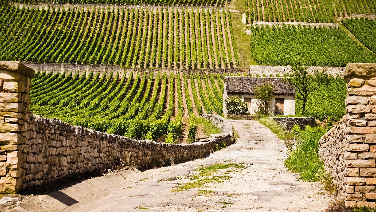 8 Satisfying Burgundy Values