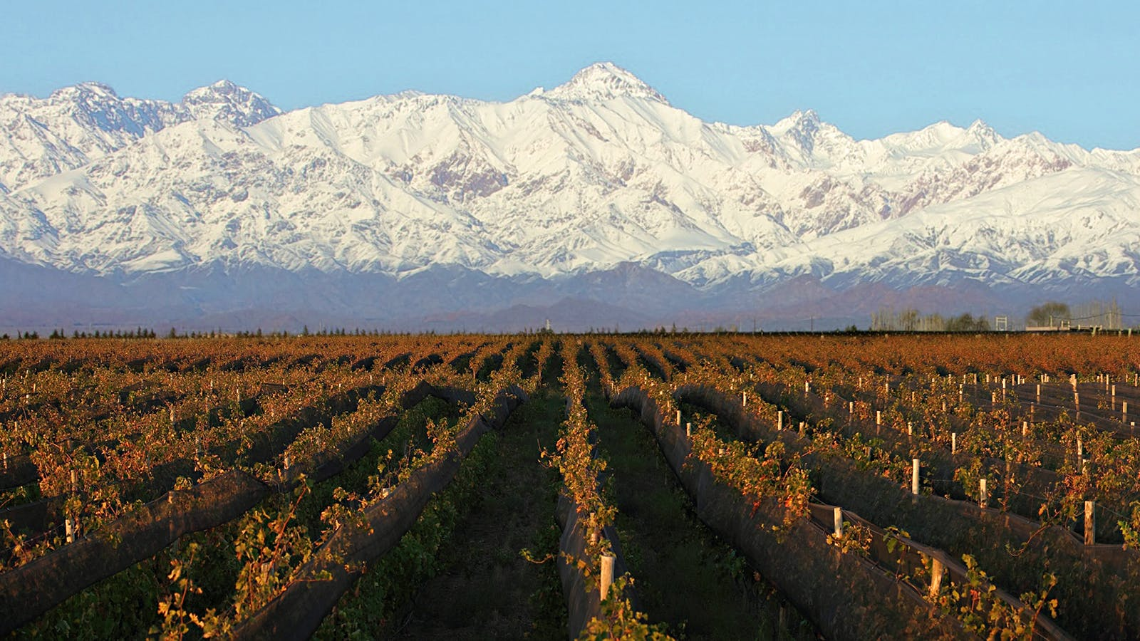 8 Outstanding Argentine Reds
