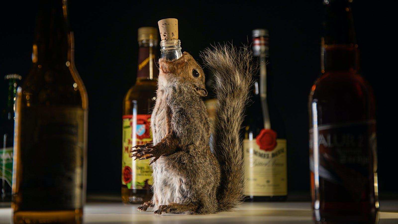 Squirrel Beer, Fish Whiskey, Poop Wine: 'Disgusting Food Museum' Opens Disgusting Drinks Exhibition
