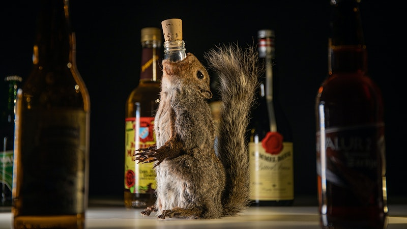 Squirrel Beer, Fish Whiskey, Poop Wine: 'Disgusting Food Museum' Opens Disgusting Drinks Exhibition