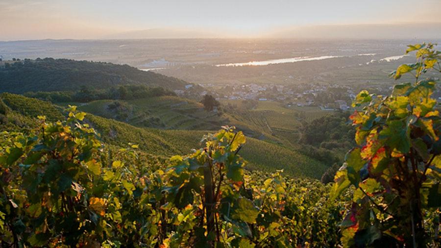 葡萄园和丘陵在距离镇