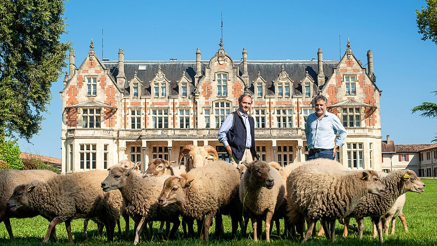 Tristan Le Lous, left, and José Sanfins have new gardeners at Château Cantenac-Brown: a flock of Scottish sheep, in honor of the winery's Scottish founder Lewis Brown.