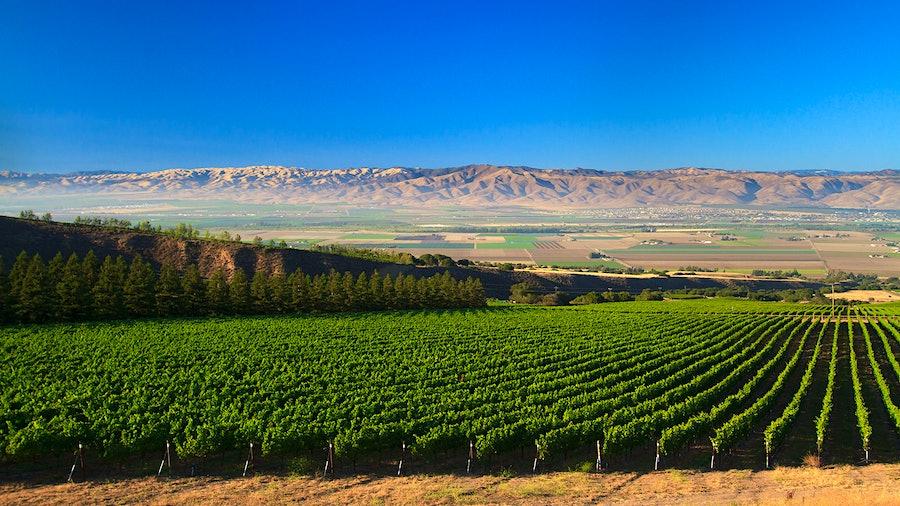 哈恩家庭水龙头的1100英亩蒙特雷葡萄园,使葡萄酒的平衡质量和价值。金宝博手机
