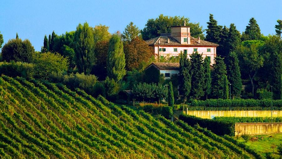 Marotti Campi在Morro d'Alba的庄园占地296英亩,其中大部分用于种植葡萄和Lacrima。