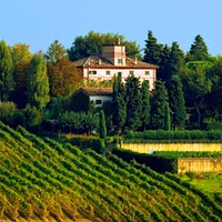 Marotti坎比的整个296英亩房地产绵延在莫罗达尔巴,其中很大一部分投入到葡萄韦尔迪基奥和Lacrima.8刷新值白人意大利