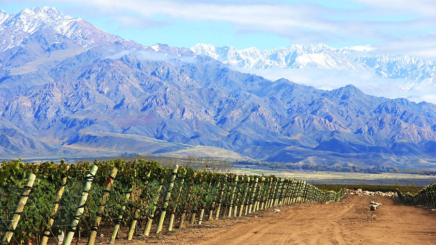 Familia Zuccardi的葡萄园由附近安第斯山脉的融雪补充。