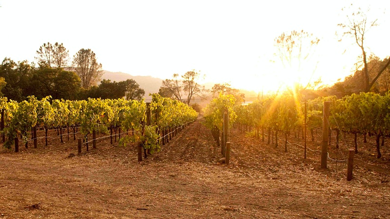 9 Napa and Sonoma Gems at 90+ Points