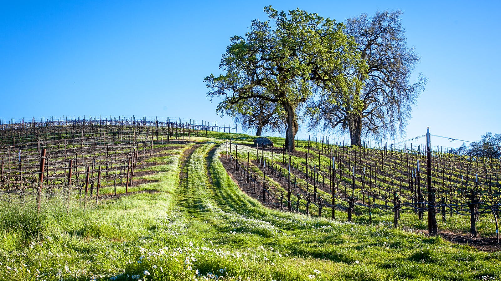 13 Delectable California Pinot Noirs Up to 91 Points