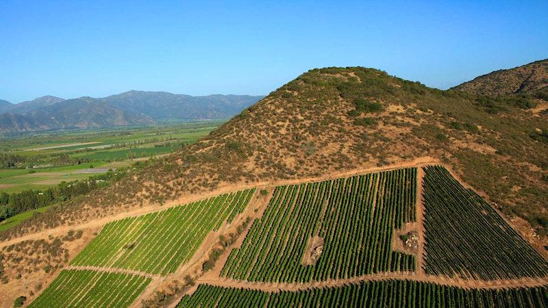 9 Chardonnay Values to Explore the World