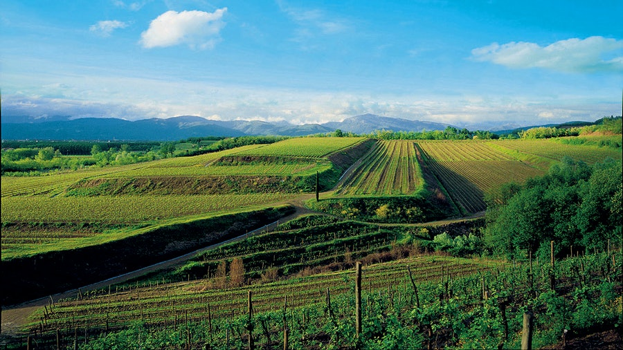 Friuli's Livio Felluga estate was founded in the 1950s, and today includes nearly 400 acres of vineyards.